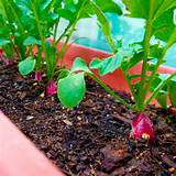 Mountain Gardening: Small-Space Vegetable Gardening