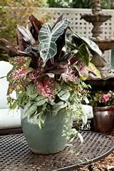 ... Shade Container - Summer Gardening Ideas / Armstrong Garden Centers