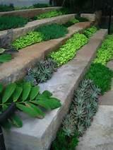 Succulents | Succulents, Cactus...Garden Ideas | Pinterest