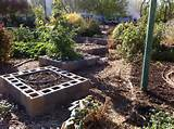 friday feature community gardens vynnie mcdaniels