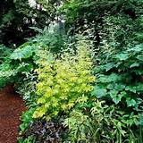statement in your shade garden without flowers by combining plants ...