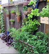 Vertical gardens take advantage of narrow garden beds and upright ...