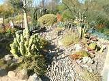 Cactus garden with dry river bed
