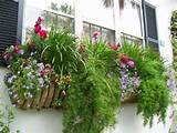 Ewa in the Garden: 13 Best Window Box Ideas