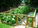 Great Vegetable Garden Ideas | 23802 | Home Design Ideas