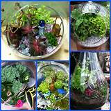 Terrariums make great gifts for the housebound gardener
