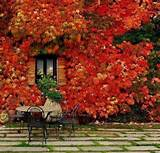 fall-garden-backyard-landscaping-ideas-10.jpg