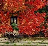 fall garden backyard landscaping ideas 10 jpg