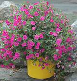 in container garden ideas container garden ideas container gardening ...