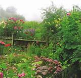 cottage garden | Cottage Garden ideas | Pinterest