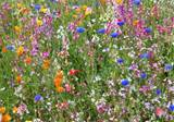 Wildflower Garden | Gardening Tips | Garden Guides