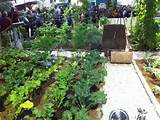 related post from backyard vegetable garden ideas