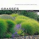 Grasses | garden ideas | Pinterest