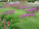 burlington wi gardens ideas landscapes ideas butterflies gardens ...