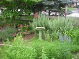 My Garden | Cottage Garden & Yard Ideas | Pinterest