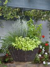 The Concept Of Container Gardening Ideas