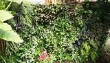 xericoasis vertical gardening in boise vertical gardening