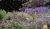 designs gardens landscape design 332 1 0 project by anne hartshorn ...