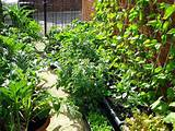 vertical garden vegetable garden ideas pinterest