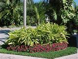 by delray plants on landscaping ideas with tropical foliage pin