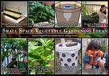 Small Space Vegetable Gardening Ideas - Blog - Martys Garden Community