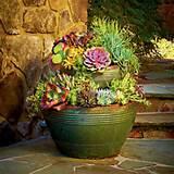 Succulent planting ideas | Garden Art | Pinterest