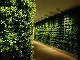 indoor-vertical-garden-ideas-505x378.jpg