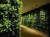 indoor vertical garden ideas 505x378 jpg