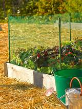 ways to keep rabbits out of your garden gardeneners supply