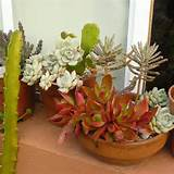 35 Indoor And Outdoor Succulent Garden Ideas » Photo 28