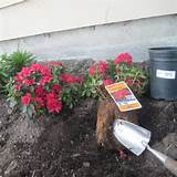 northwest gardening dirt cheap shrubs
