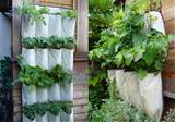 diy vertical herb garden with a shoe organizer greenupgrader