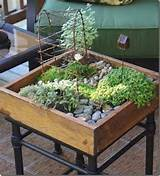 How about planting an Indoor Fairy Garden. You could have a lot of fun ...