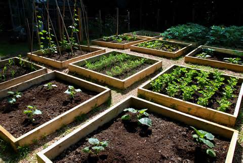 Progress in the raised bed vegetable garden | The Modern Gardener