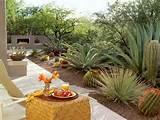 Tucson Garden - MyHomeIdeas.com