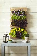 No horizontal space for vegetable gardening? Grow a vertical garden in ...