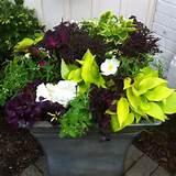 Shades Container Gardens Ideas, Garden Ideas, Gardens Ideas For Shades ...
