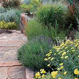 informal garden design easy backyard landscaping ideas stone path