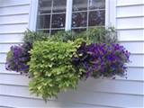 ... Impatient Gardener: Window box ideas | Flowers and Gardening | P