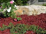 Rubber Landscape Mulch in Most Popular Cedar Red Rubber Mulch