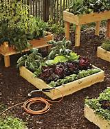 No-dig vegetable gardens with raised garden beds