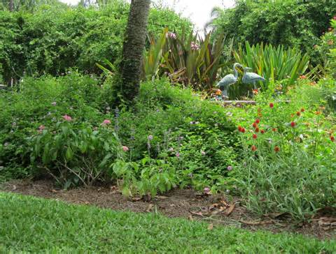 how to landscape and garden in florida all about florida