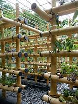 Growing Plants Vertically Using Bamboo