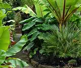 Cottage Garden Formal Design Tropical Garden Low Maintenance