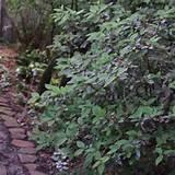 Shade garden | Diggin in the Dirt | Pinterest
