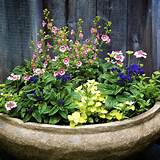large garden pots garden idea