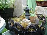 miniature garden ideas it looks like japanese garden love