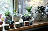 diy-indoor-teacup-succulent-garden-5