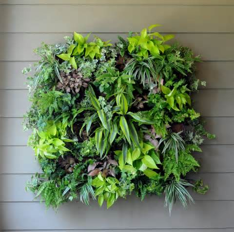 pamela crawford living wall planter w liner
