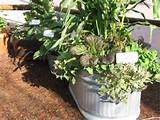 container vegetables vegetable gardening pinterest